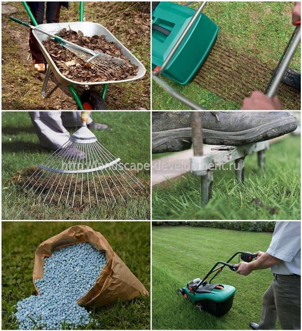 Когда и как правильно посадить газонную траву своими руками