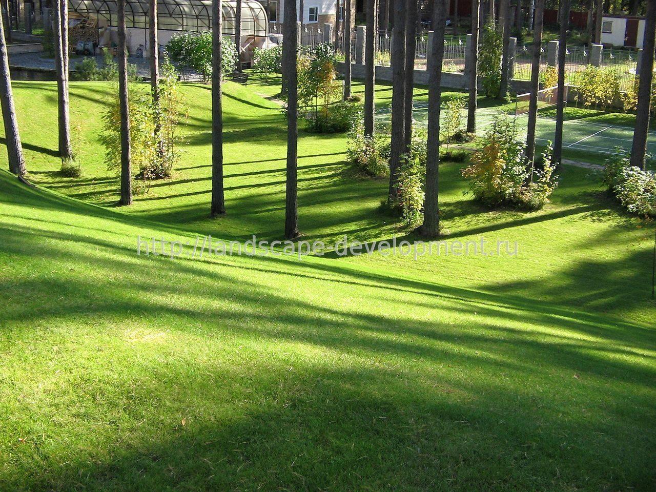 Озеленение городов картинки